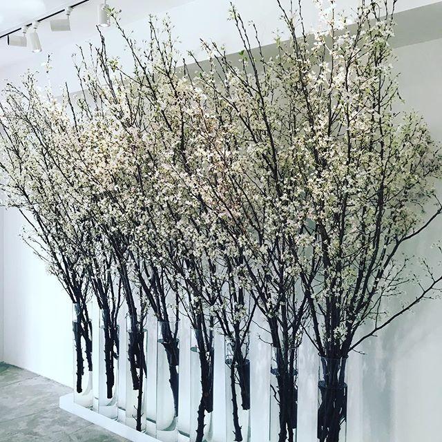 1月の東京で桜を観られるなんて?_1_1-5