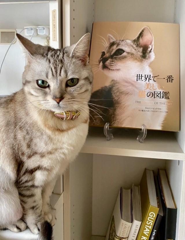 愛猫セイラ店長との日々_1_1