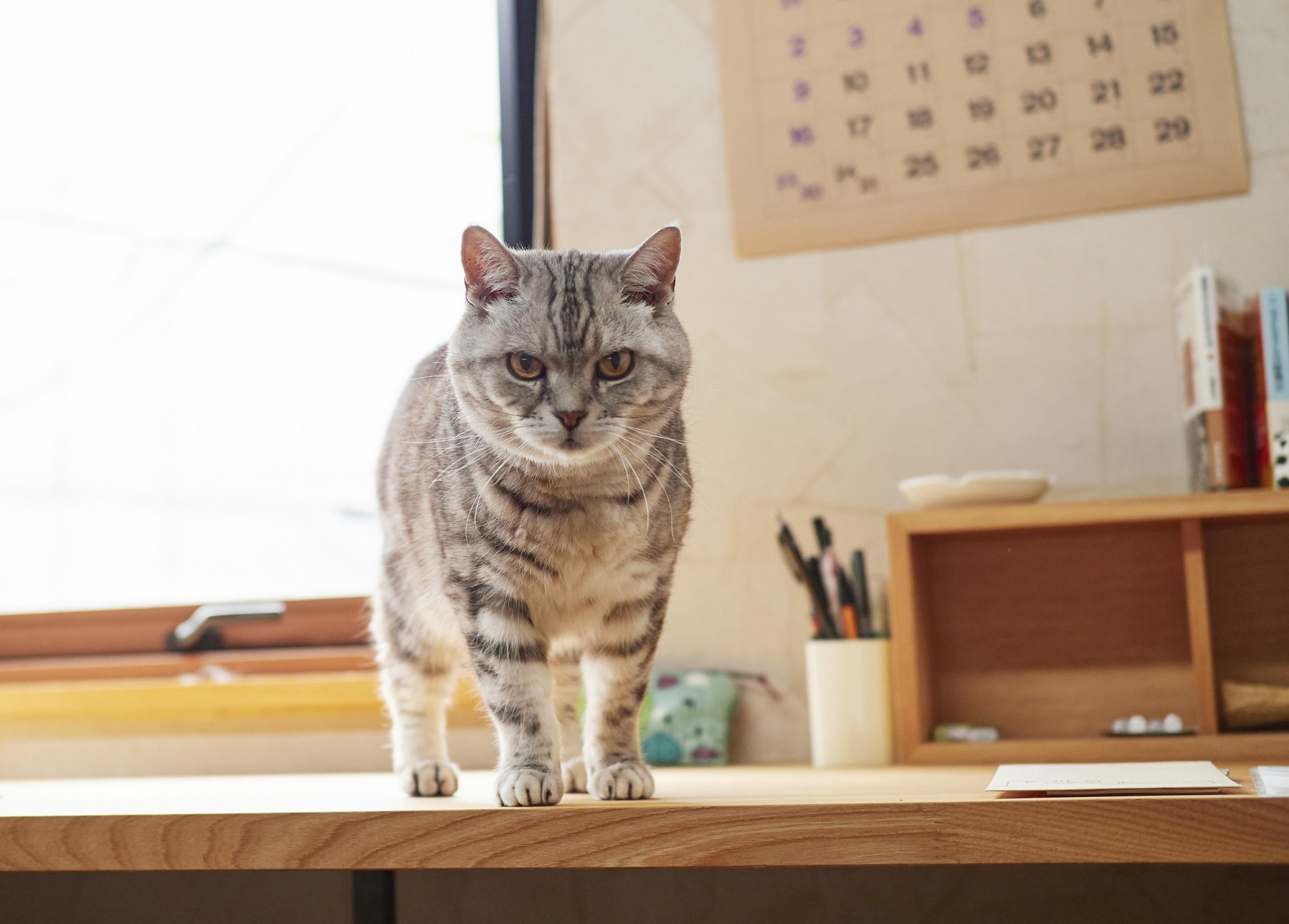 【あの人の溺愛ねこ図鑑 第6回】角田光代さんの愛猫はひそかに甘えん坊なトト_1_3-2