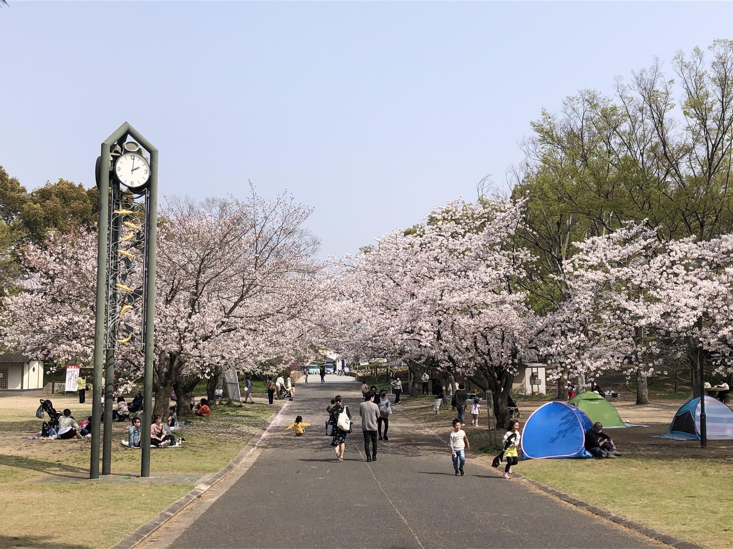 時計台 桜の木
