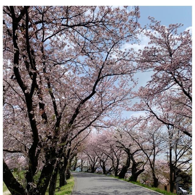 【春のお買い物②】お値段以上で着回しも抜群!2wayタイトスカート。_1_1