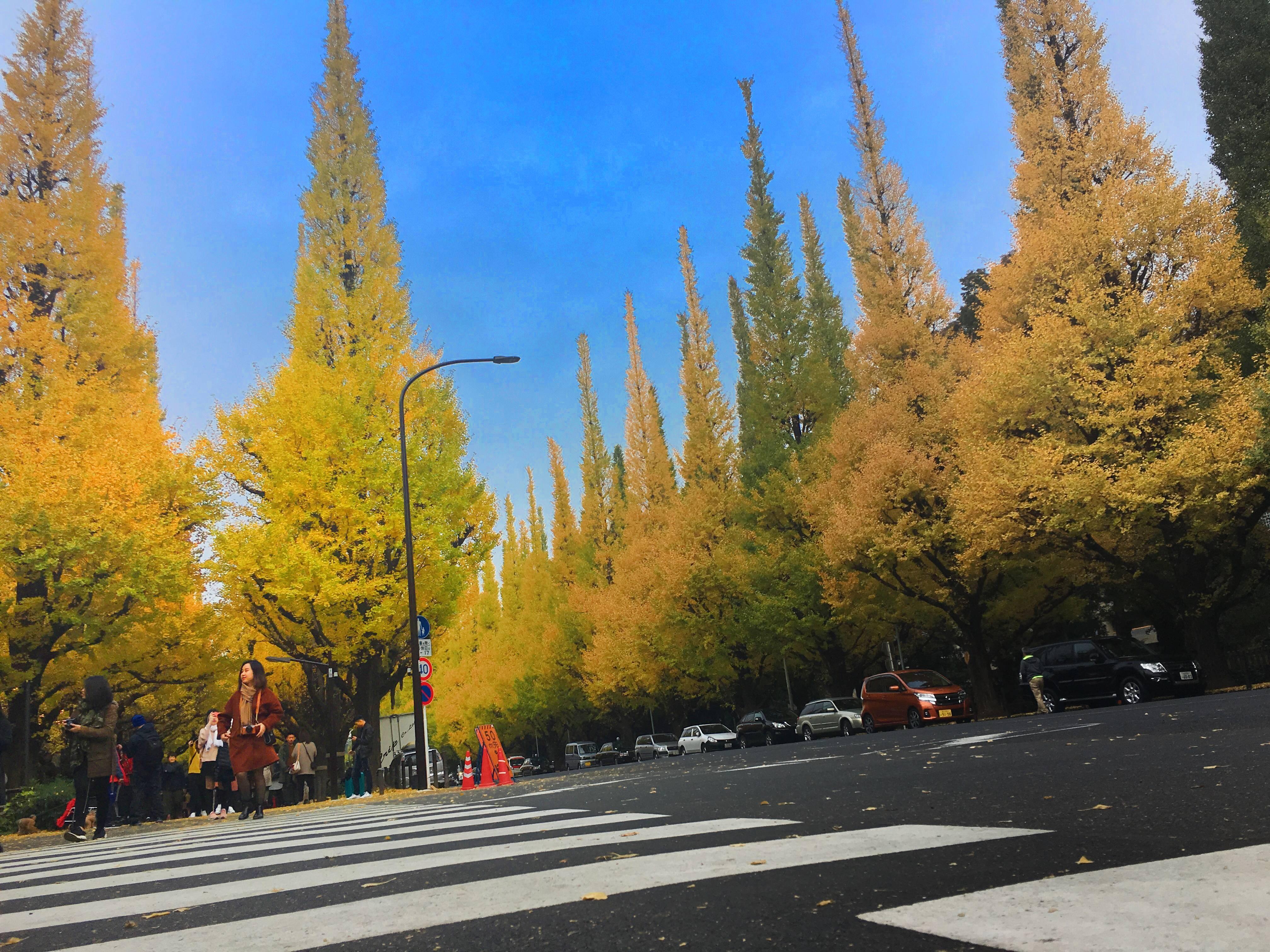 秋は紅葉デートで朝活_1_2