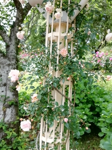 鉄の柱に絡む薔薇の蔦