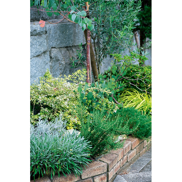 花壇の寄せ植えハーブで自家製ソース作り