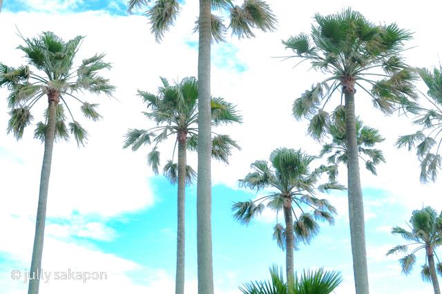 【さかほんの冒険】南国Hawaii?!❤️@リビエラ逗子マリーナ_1_3