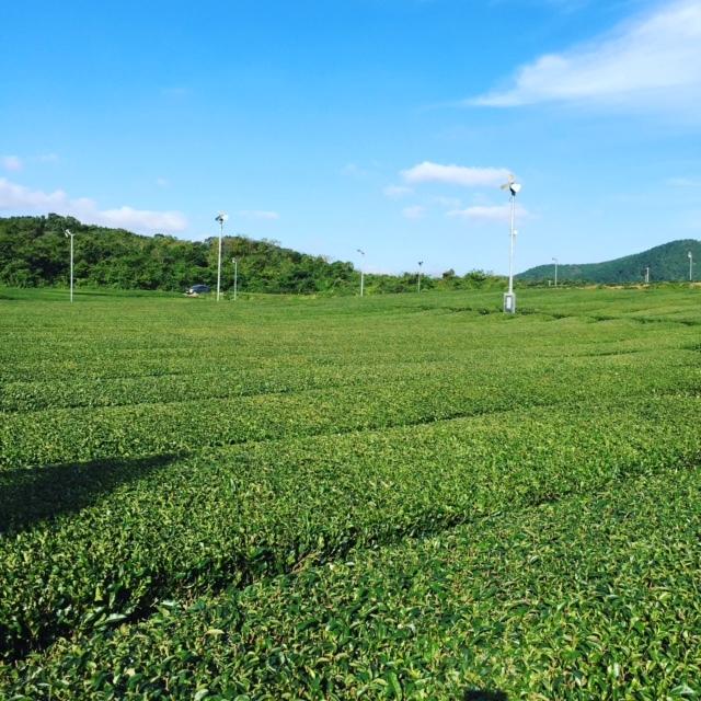 神話の島、済州島。ジェジュ・シンワ・ワールド・マリオット・リゾートで癒される!②_1_3-1