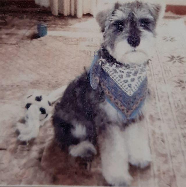 シニア犬 介護