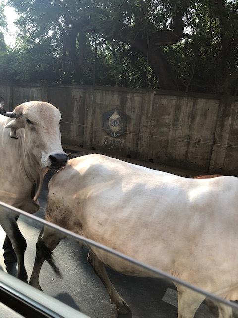 魅惑の国インド、ムンバイを楽しむ!_1_1-2