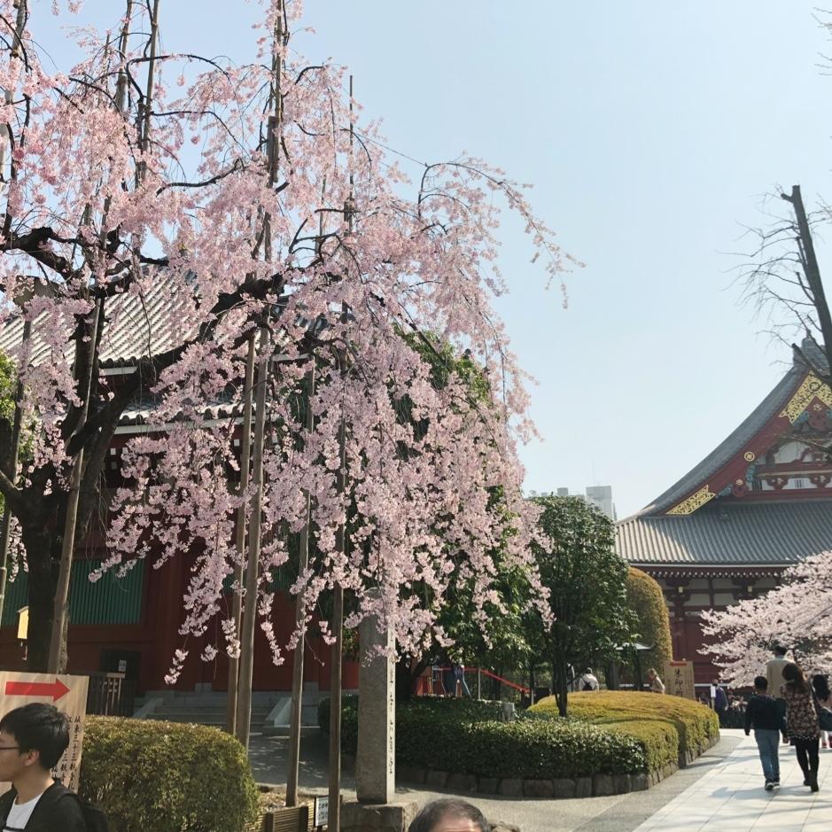 春の浅草_1_2