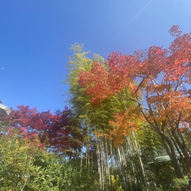感染症対策しながらGoToトラベルで京都へ_1_3