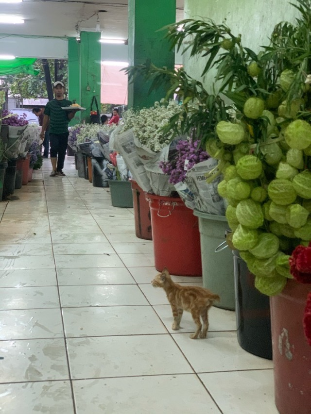 ジャカルタの花市場、Rawa Belong Flower Marketへ♪_1_7