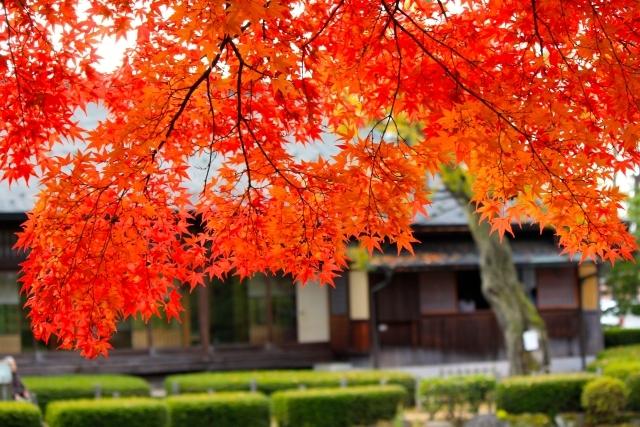 50代のお出かけ① 遠出が気持ちいい秋。行きたいのはやっぱり…!_1_3