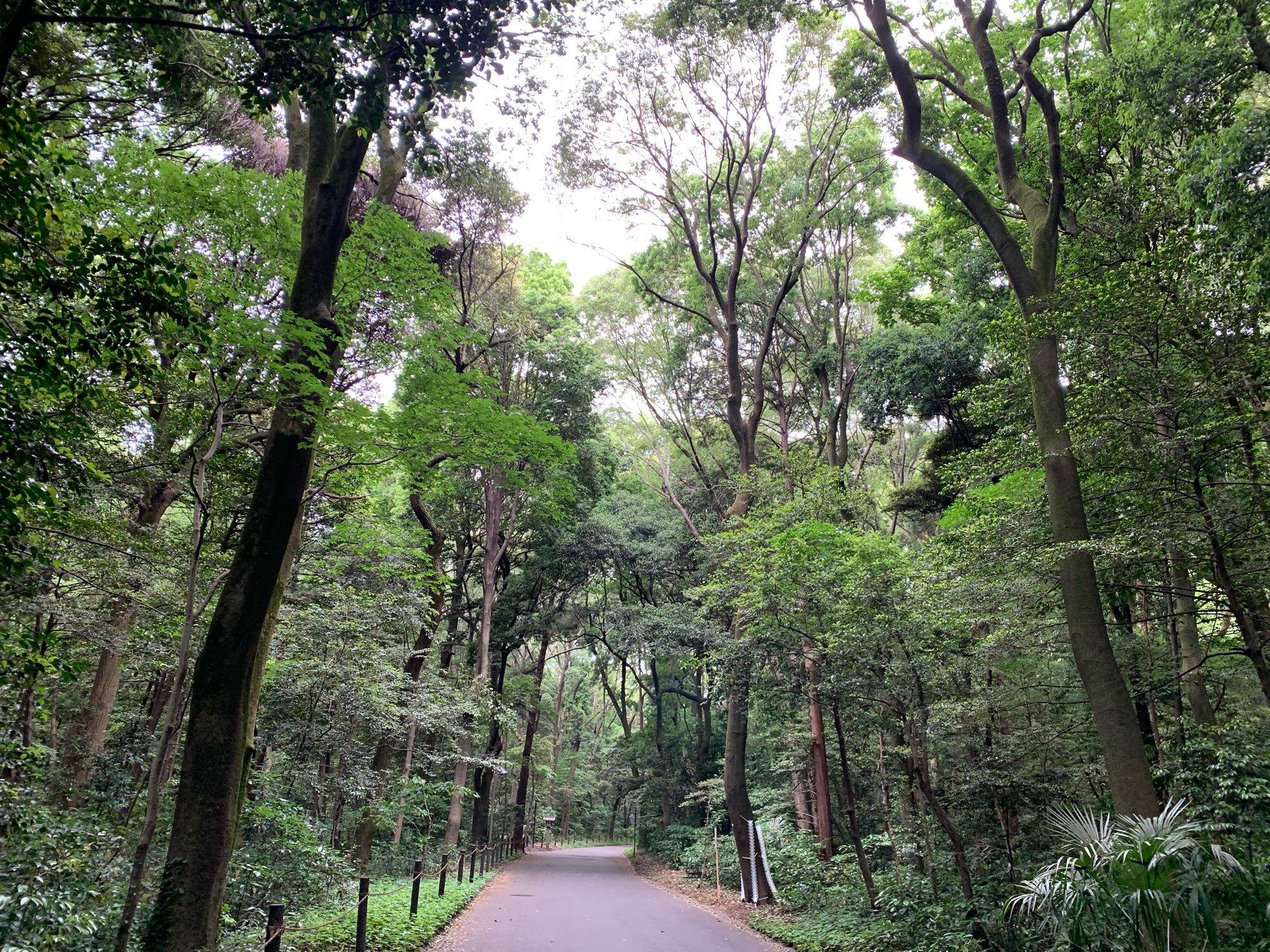 明治神宮の森の小道で浄化