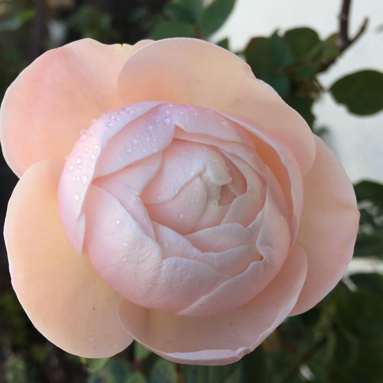 花を飾って春を取り入れる_1_5