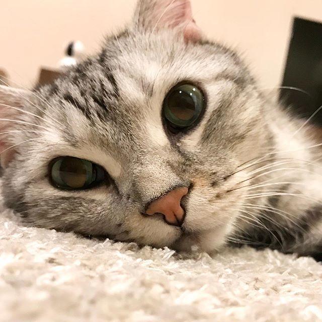 床暖房に寝転ぶアラン