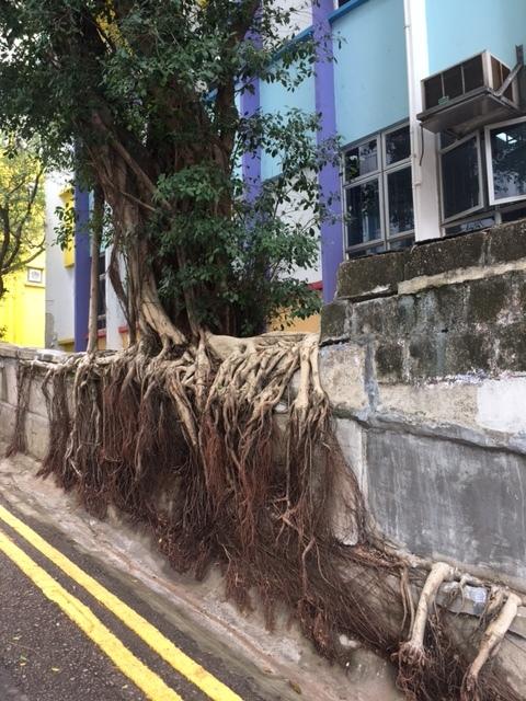 香港的撮影スポット Ladder Street_1_2-3