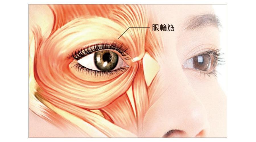 眼輪筋の低下