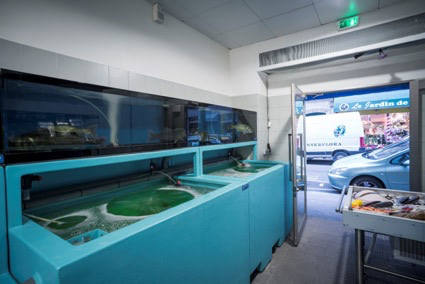 パリで魚屋も開く。銀座小十店主の「日本料理を世界食にする」挑戦|Forbes JAPAN_1_6