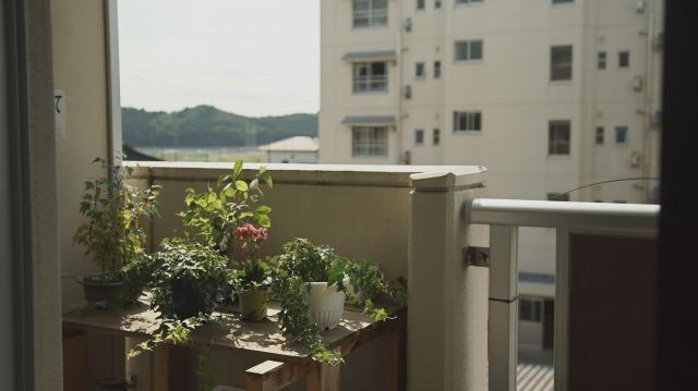 避難先の集合住宅で慈しまれる観葉植物