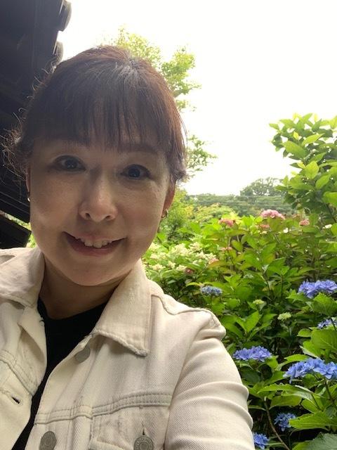 鎌倉の紫陽花が見頃です_1_1-2