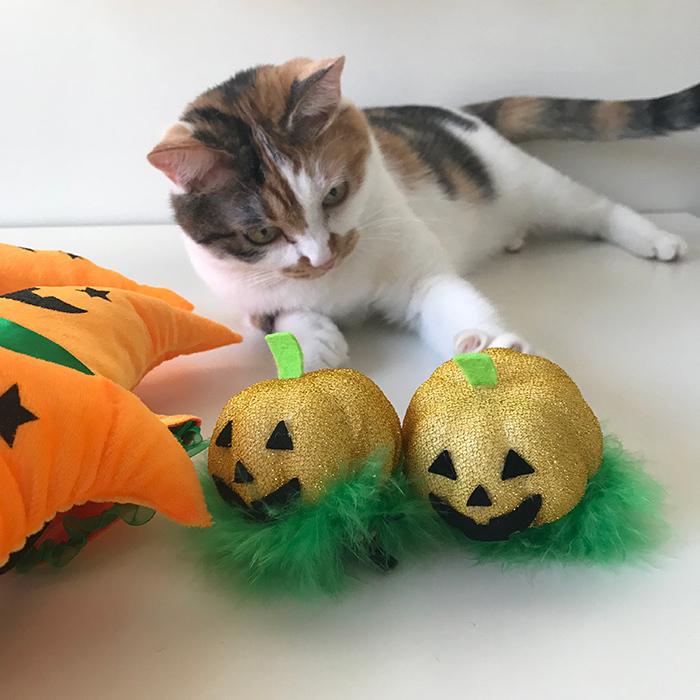 まりもちゃんとハロウィンかぼちゃ