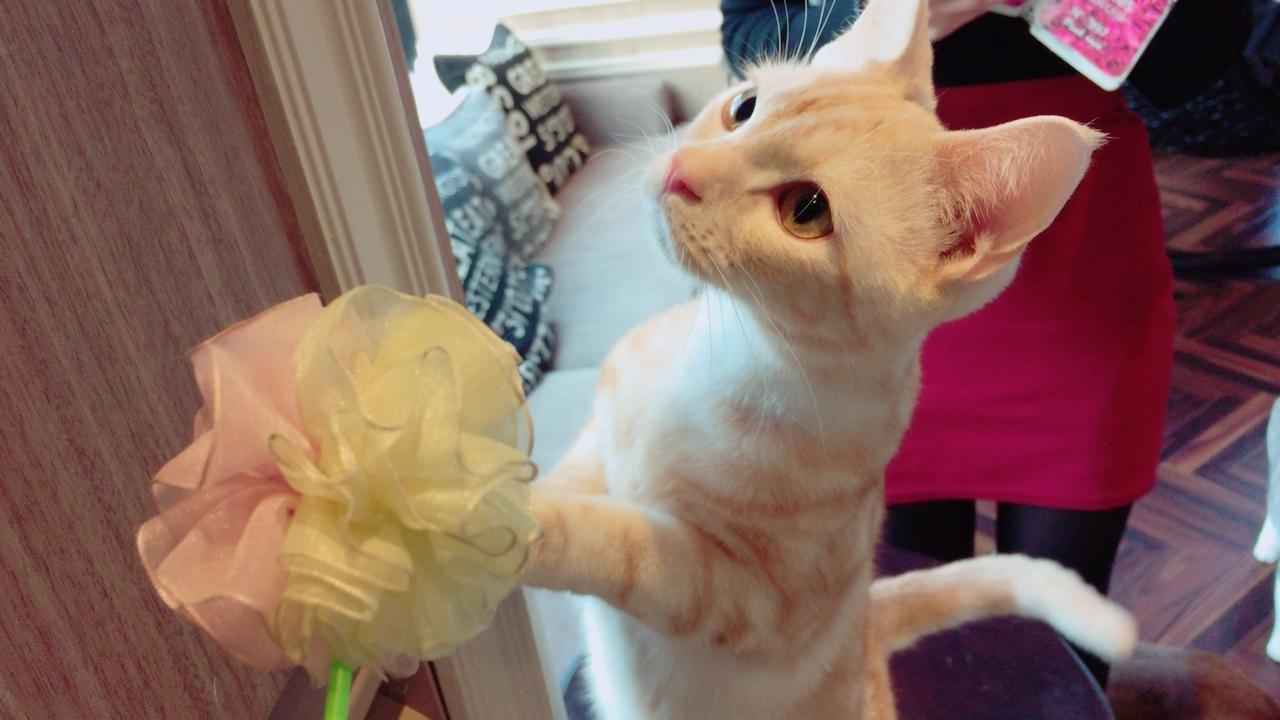 初!猫カフェに行ってきました♡_1_3-1