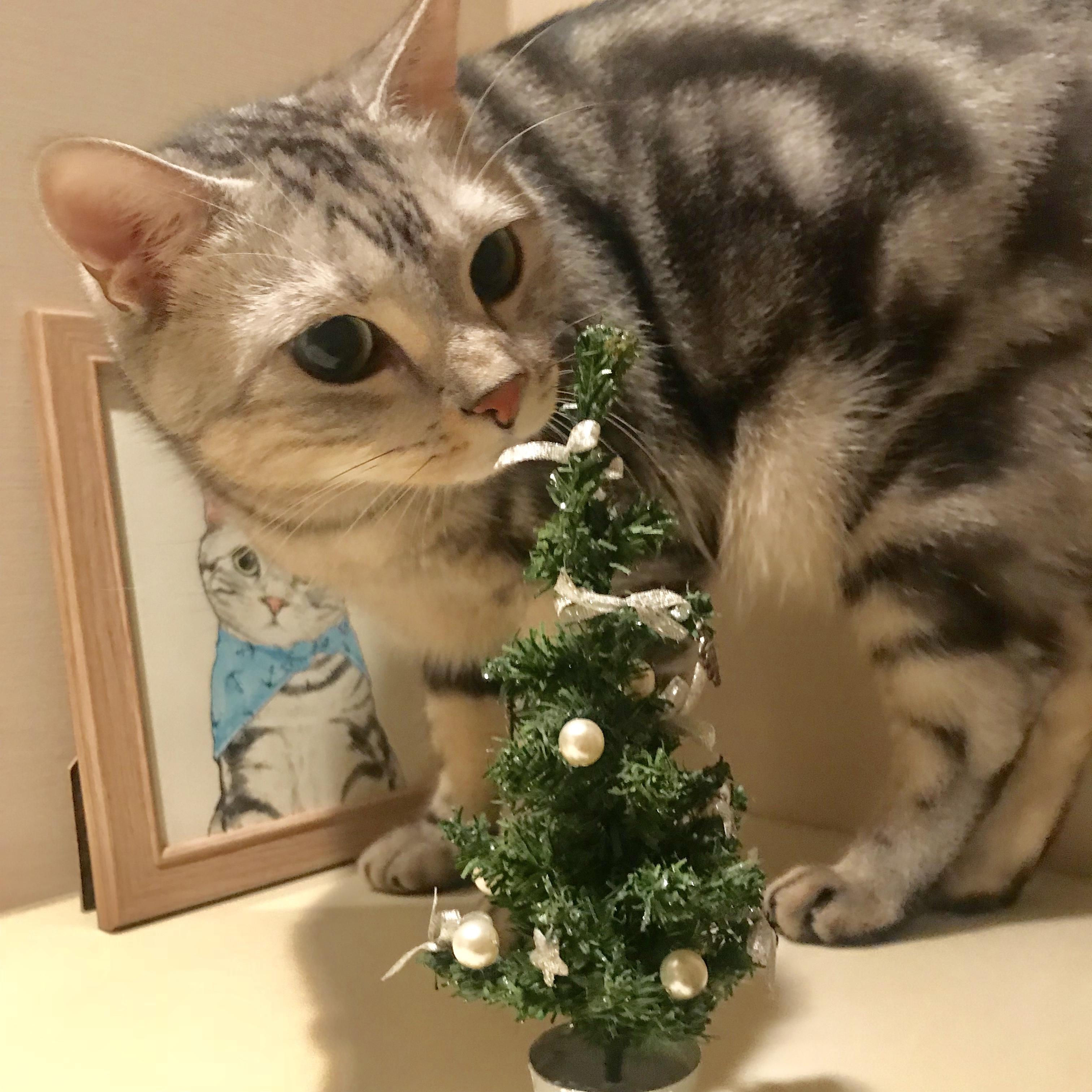メリークリスマス!_1_1-2