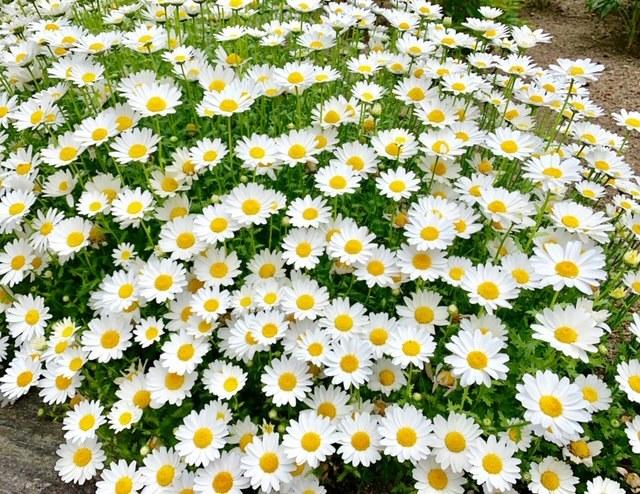 ☆「令和」元年☆藤の花のお花見でスタート!_1_4-4