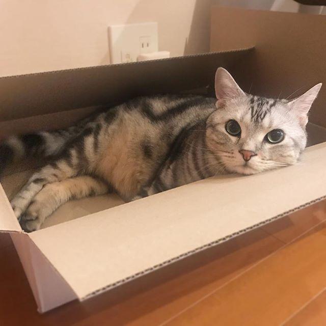 箱、LOVE!_1_2