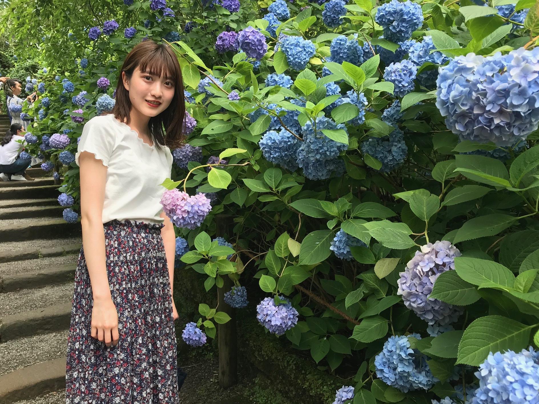 【鎌倉】紫陽花と観光名所_1_1-2
