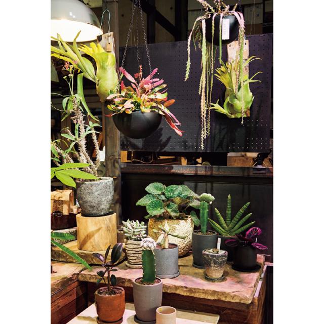 厳選されたスタイリッシュな観葉植物がそろう。