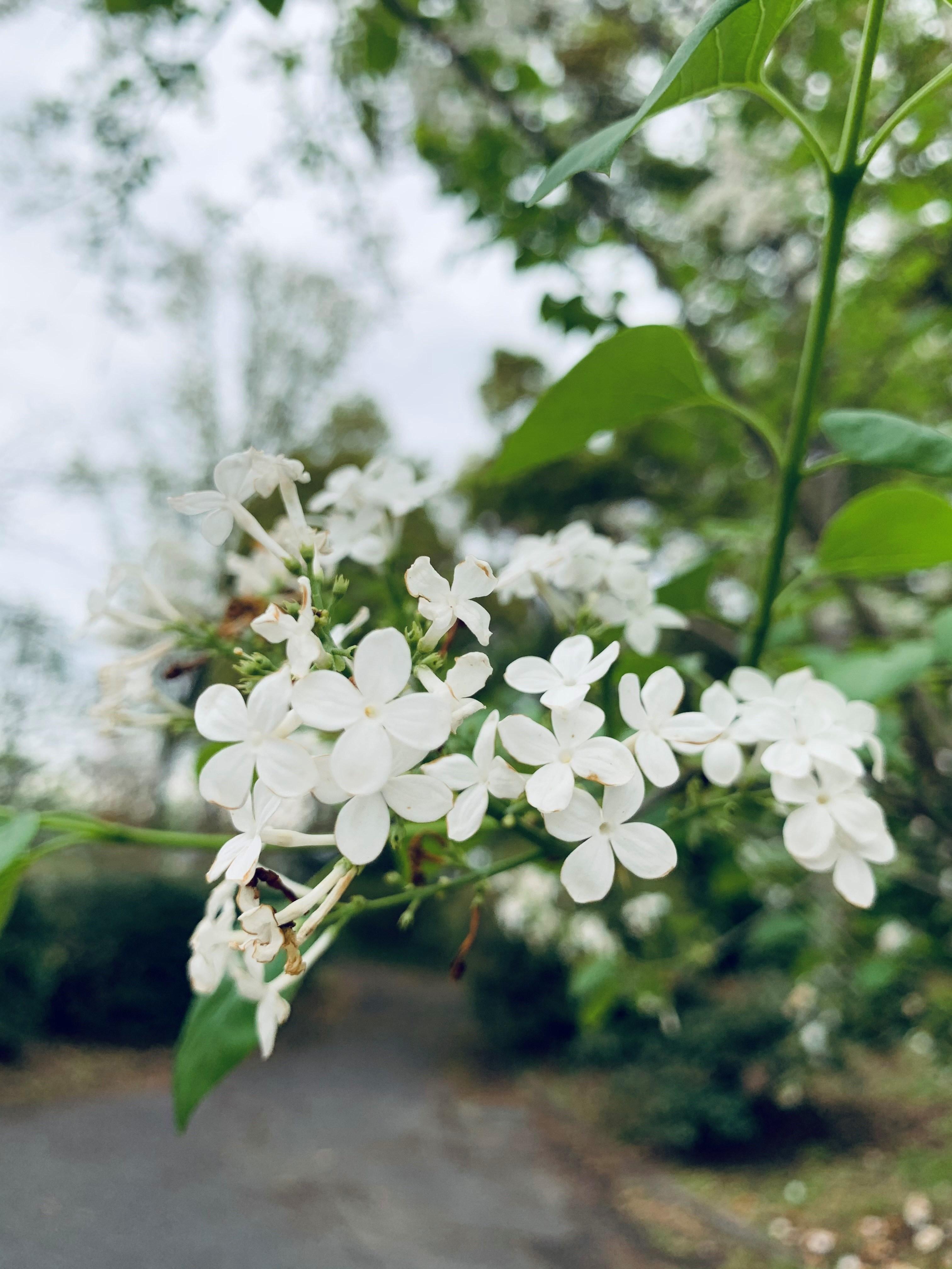 白デニムで出かけよう☆彡 春の散策・・・_1_2-2