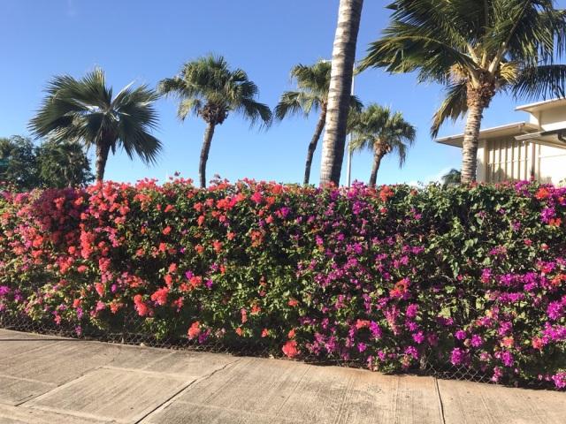 HAWAIIの景色とショッピング_1_7