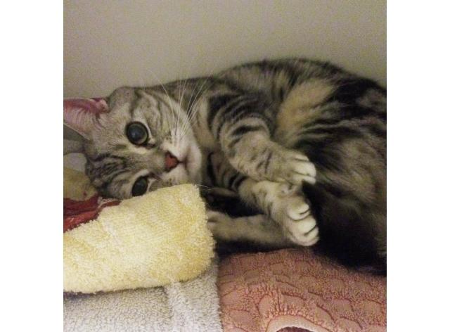 タオルになりきって隠れるのが好きなトト。