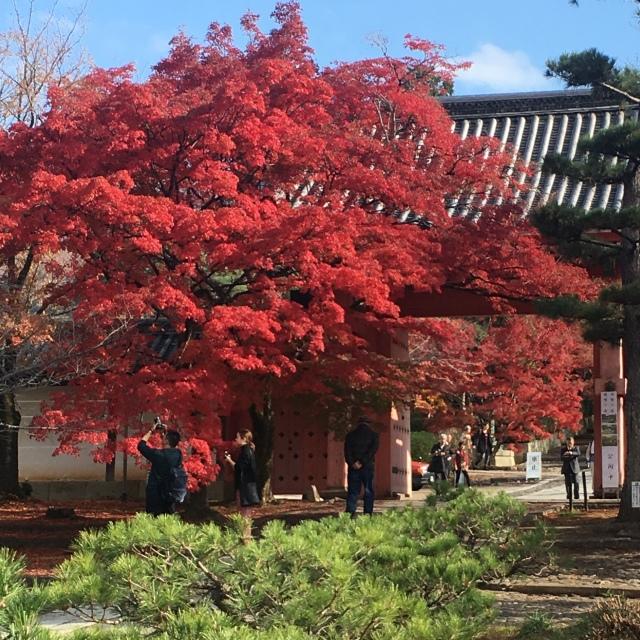 京都で思いがけず紅葉を満喫!_1_1