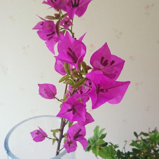私のお花LIFE_1_3