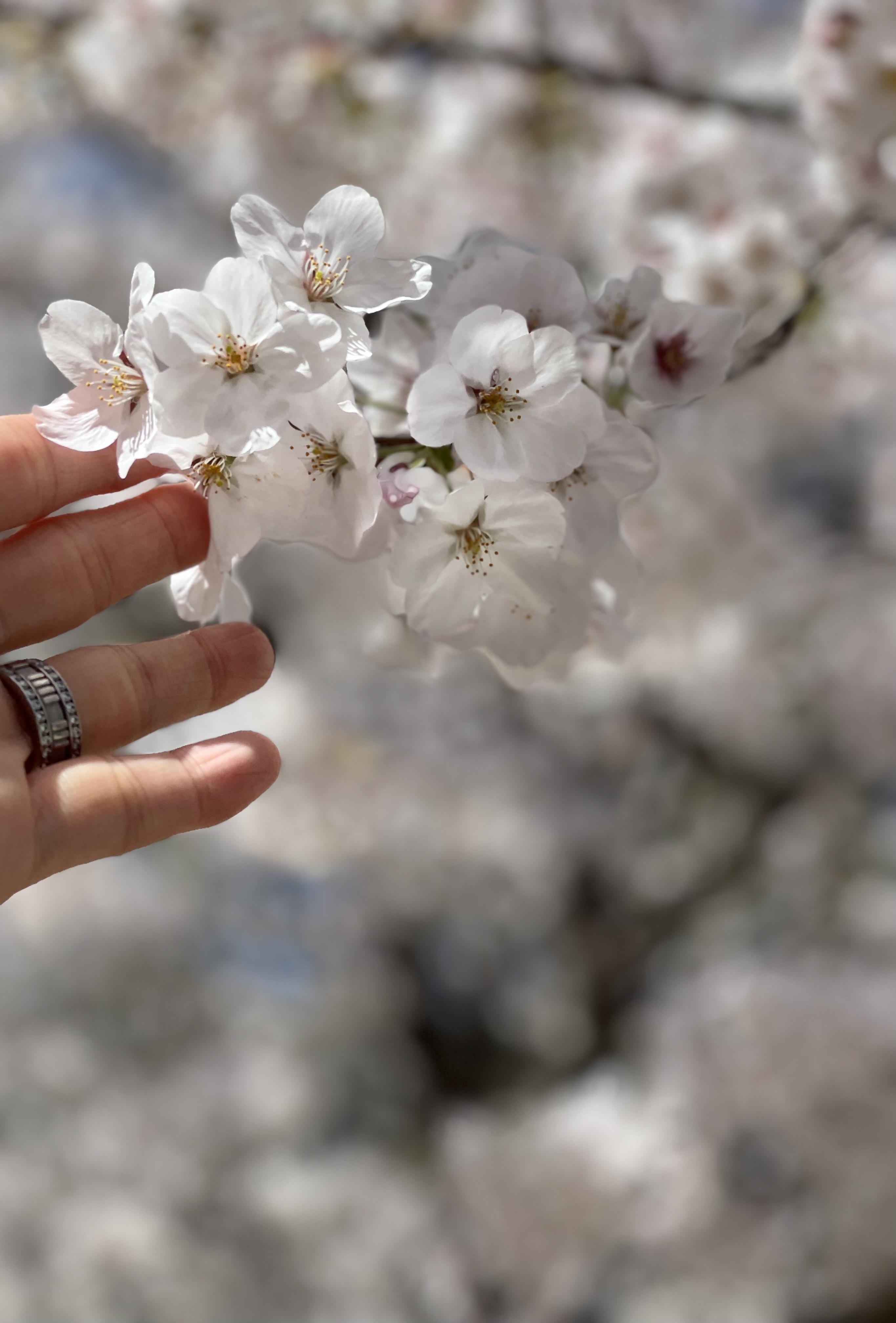 この春の新定番シャツコーデ_1_6