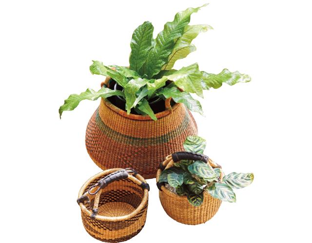 鉢カバーにしたアフリカのボルガバスケット¥4,180〜(植物別)