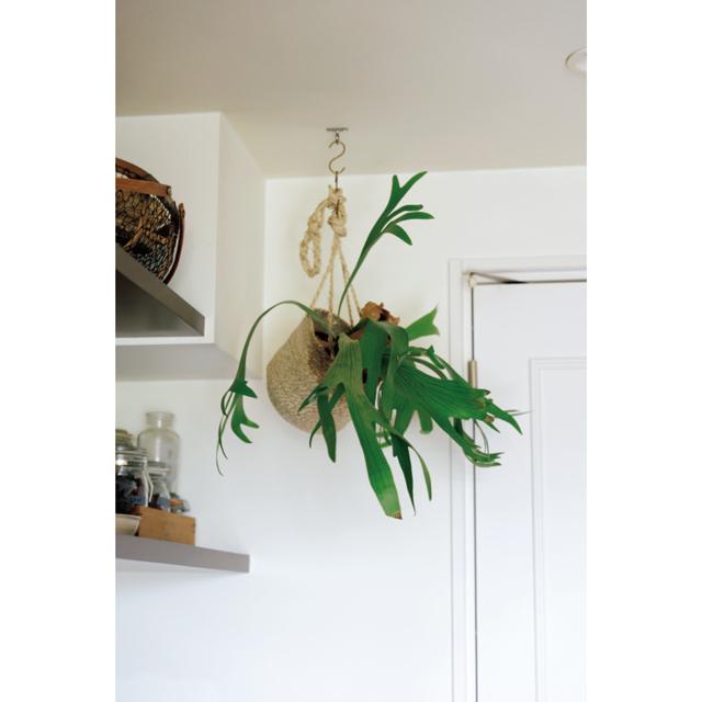 好きでたくさん育てている観葉植物たちが空間に潤いを与えてくれる