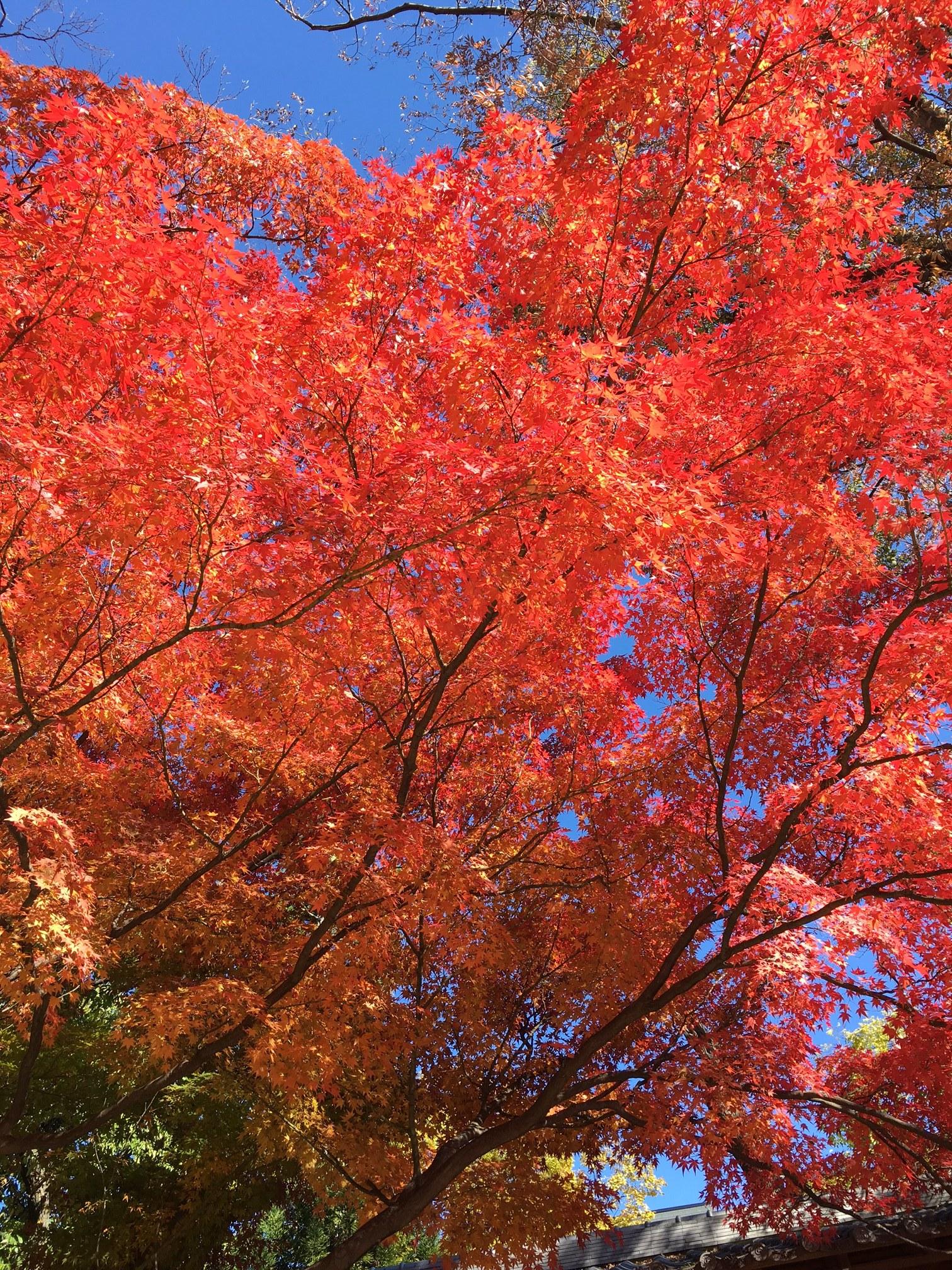 秋の旅 松本_1_4-3