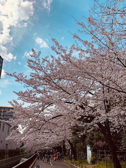 そうだ!桜を見に皇居へいこう♪_1_1-2