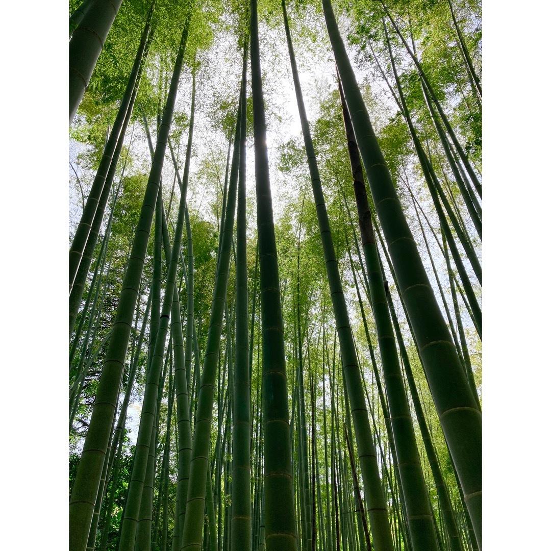 報国寺の竹の庭