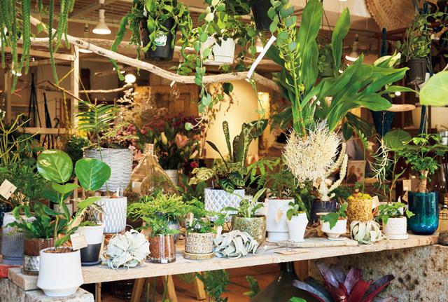 鉢と植物の合わせが魅力
