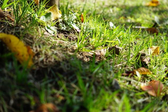 落ち葉に寄り添ってみると、落ち葉にも光が差しています。秋は、カメラを持って出掛けると自然の表情を撮る楽しみがあります。