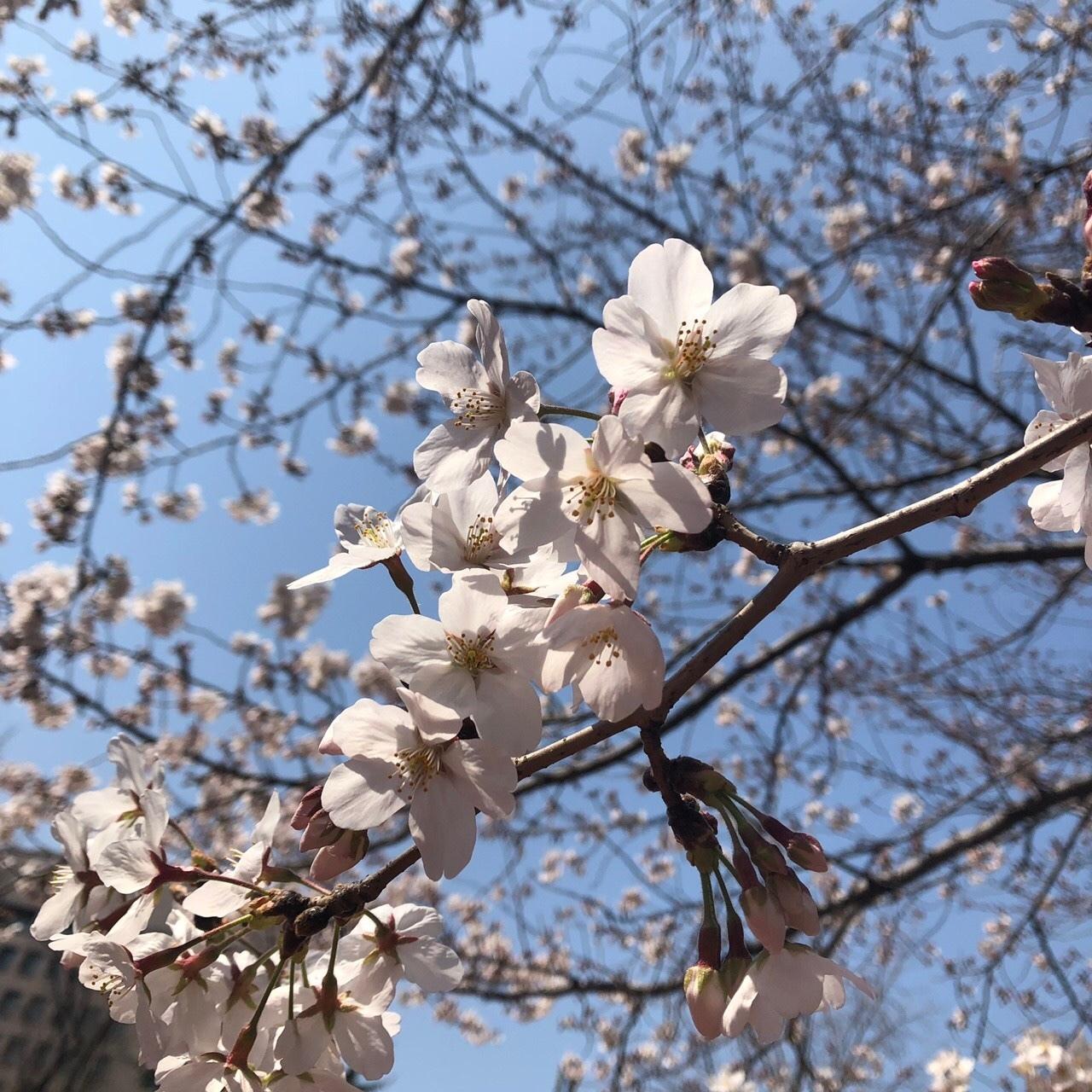 花粉で乾燥する春に!プチプラおすすめスキンケア❤︎_1_1