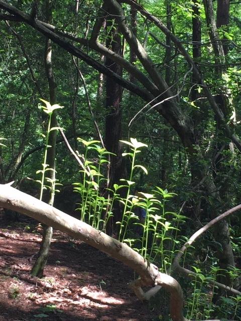 森林浴でリフレッシュ_1_3
