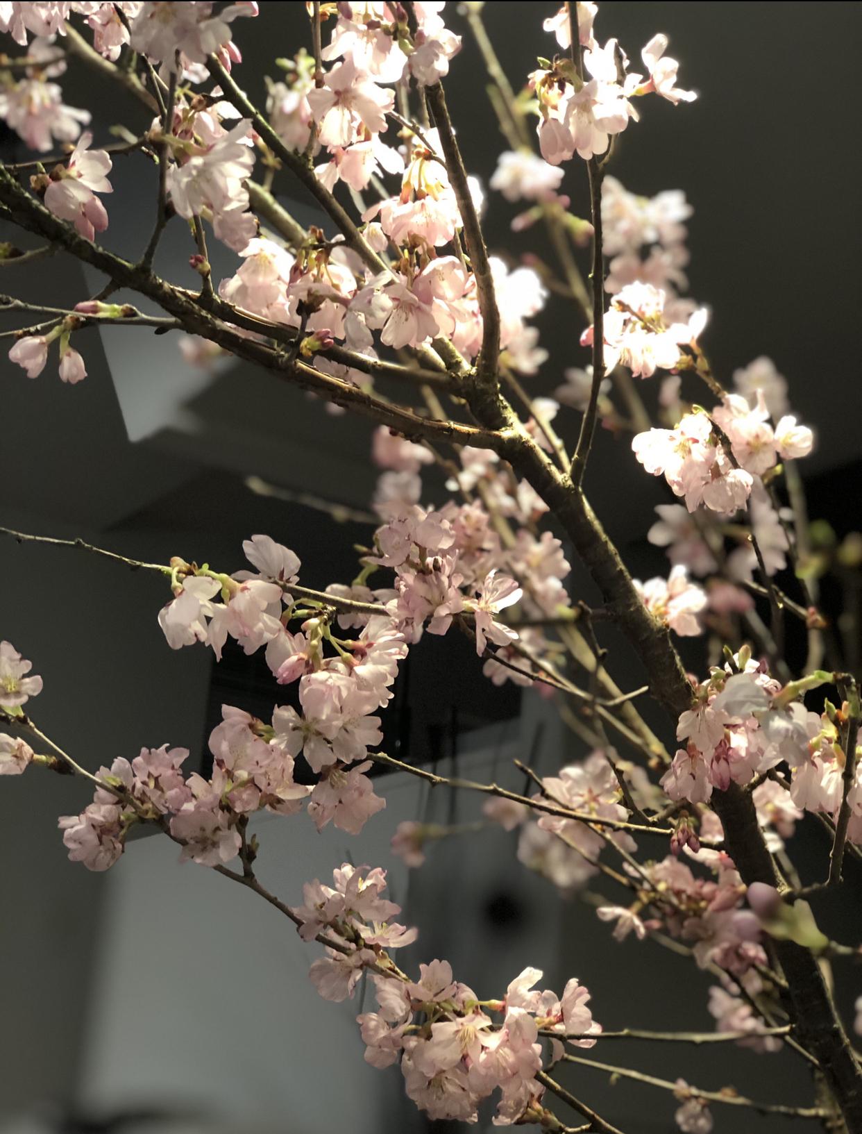 「春は、あげもの」有元葉子さんのレシピでおこもり花見_1_4-2