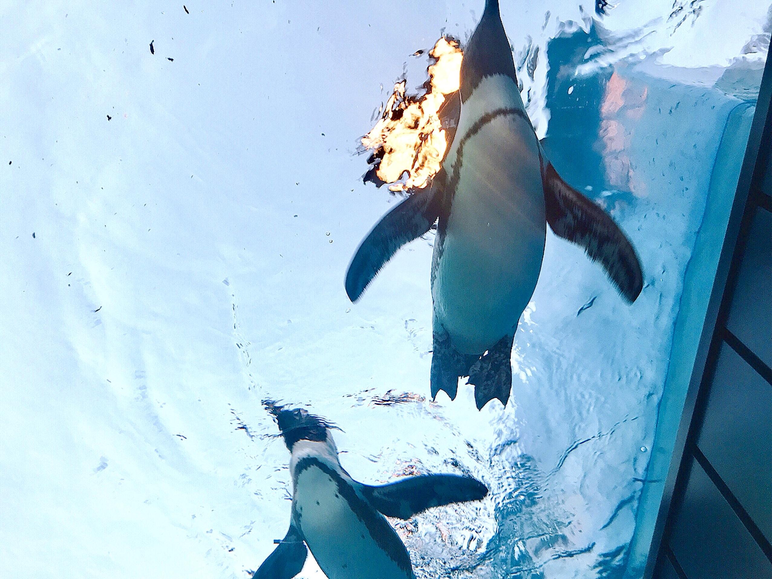 Vol.24♡ 世界初!空飛ぶペンギン?!【池袋・サンシャイン水族館】_1_4