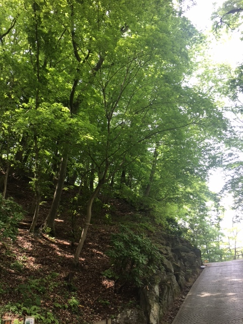 七沢森林公園を散策_1_1-3