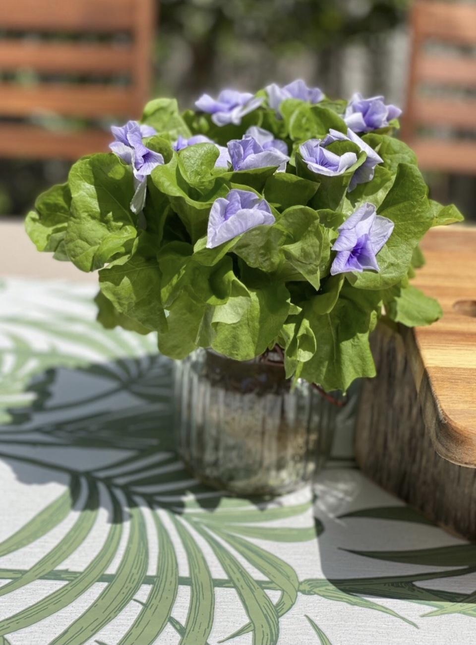 きれい色パフスリーブで石窯ガーデンランチ♪_1_2-8